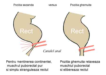 Canal-anal-rect